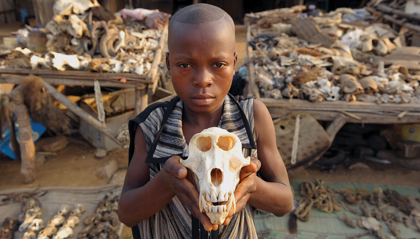 A boy in Akodessewa, Togo, holds up an animal skull at a market.