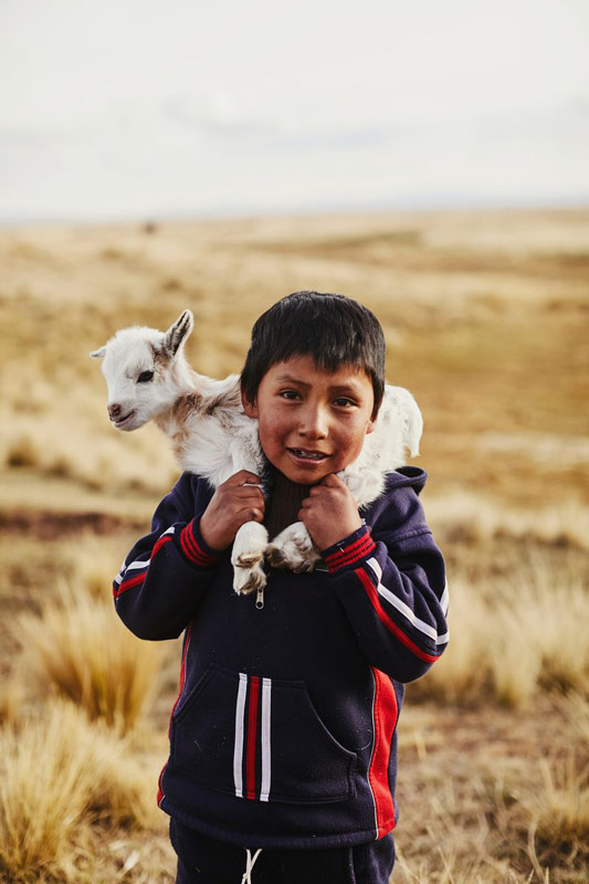 A boy holds a baby goat on his shoulders