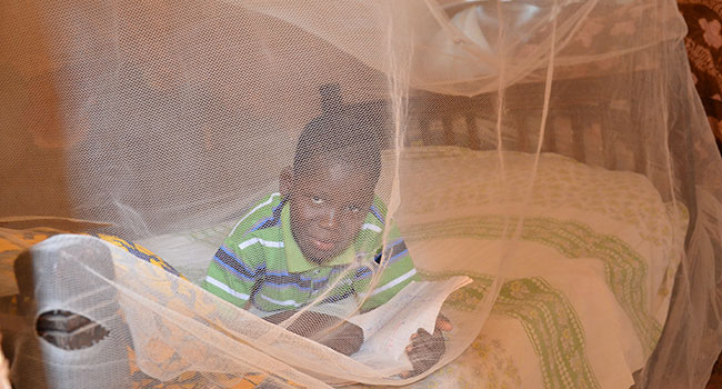Child laying in bed with a mosquito net