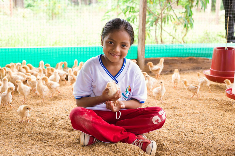 A girl sits in a chicken pen holding a chick in her hand