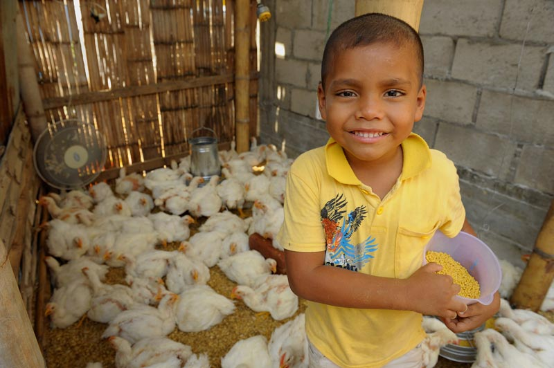 A boy stands in a chicken coop
