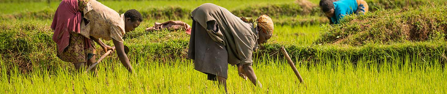 women working in a field