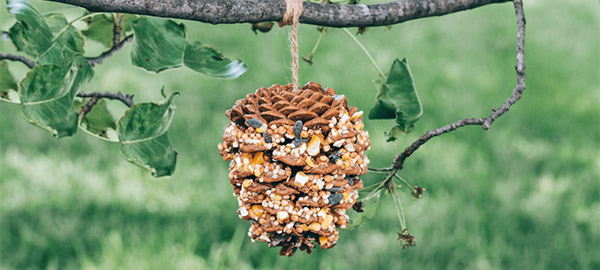 a pine cone bird feeder hanging from a tree