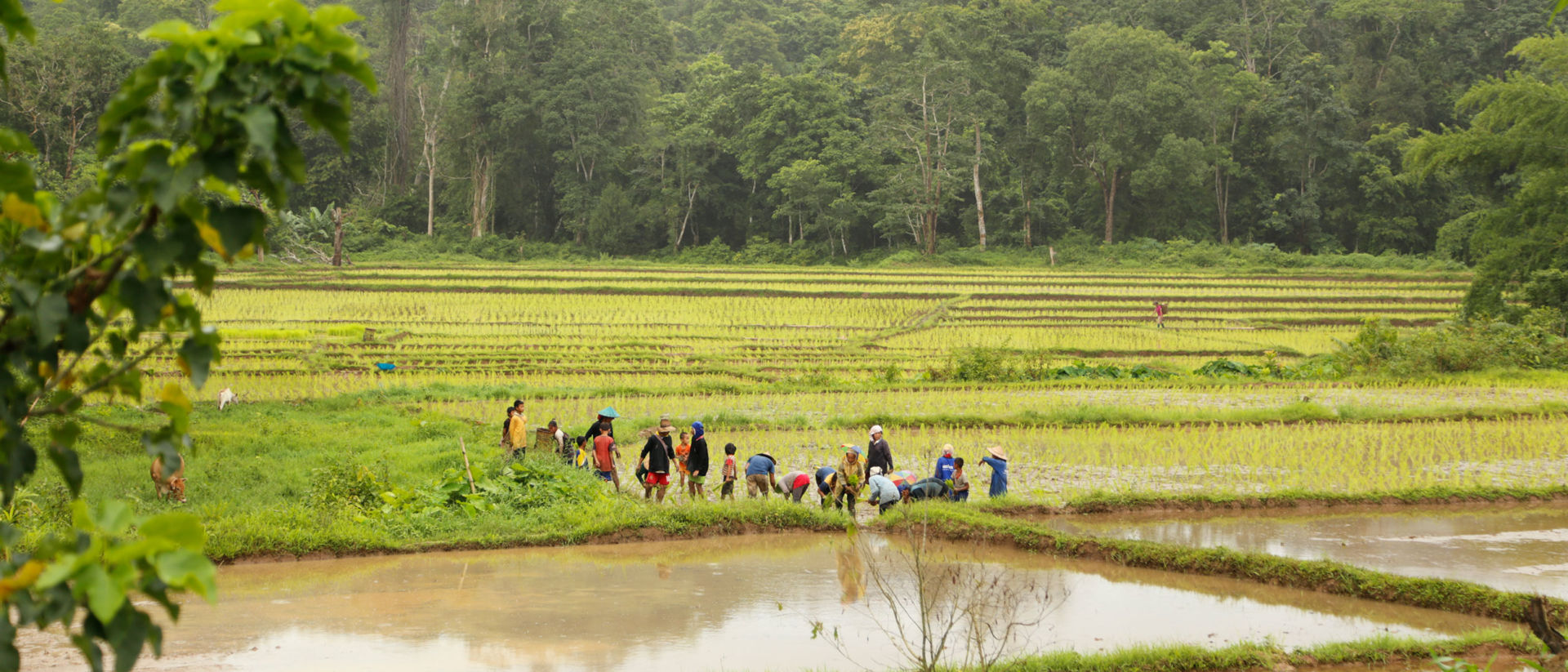 Farmers work the rice fields. Most are subsistence farmers and have little money to spend on their children's school costs or health needs.