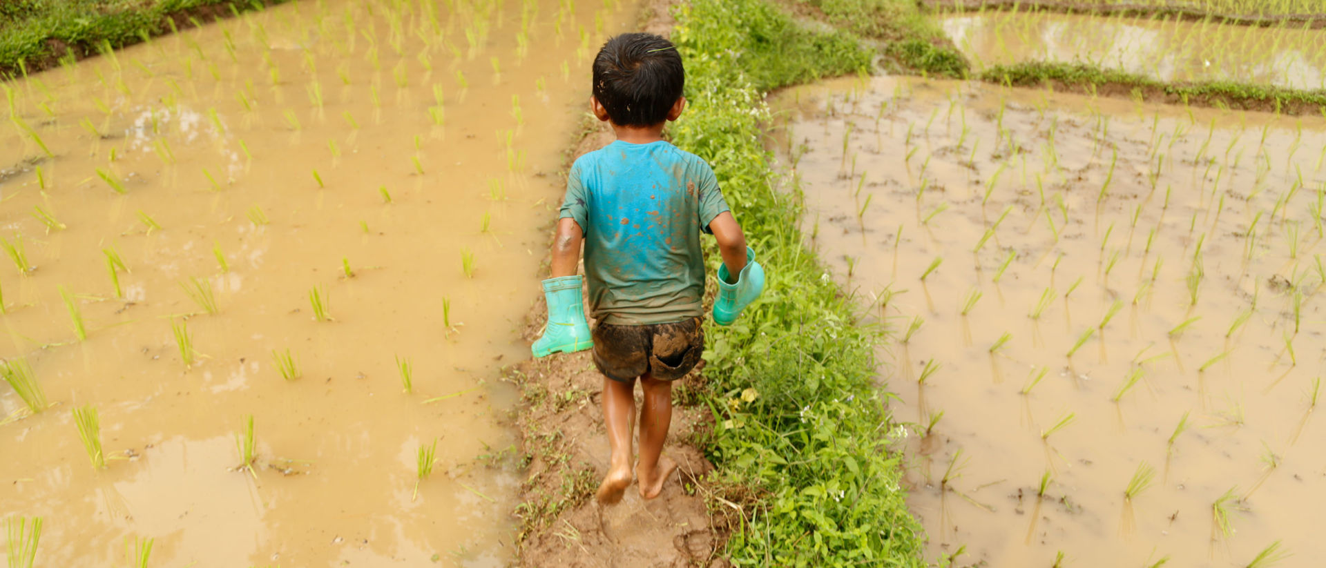 A boy in Kotah decides he doesn't need boots to run through the rice fields, where most parents in the village work for a living.