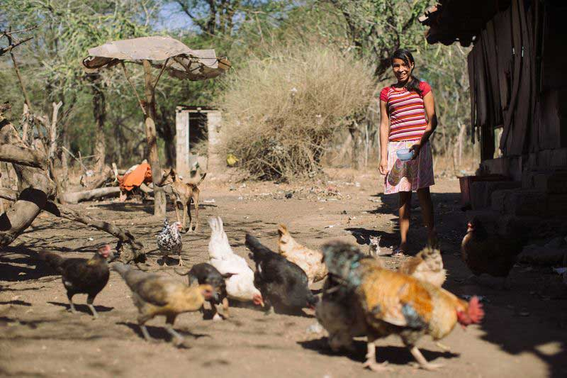 A girl stands outside and feeds chickens
