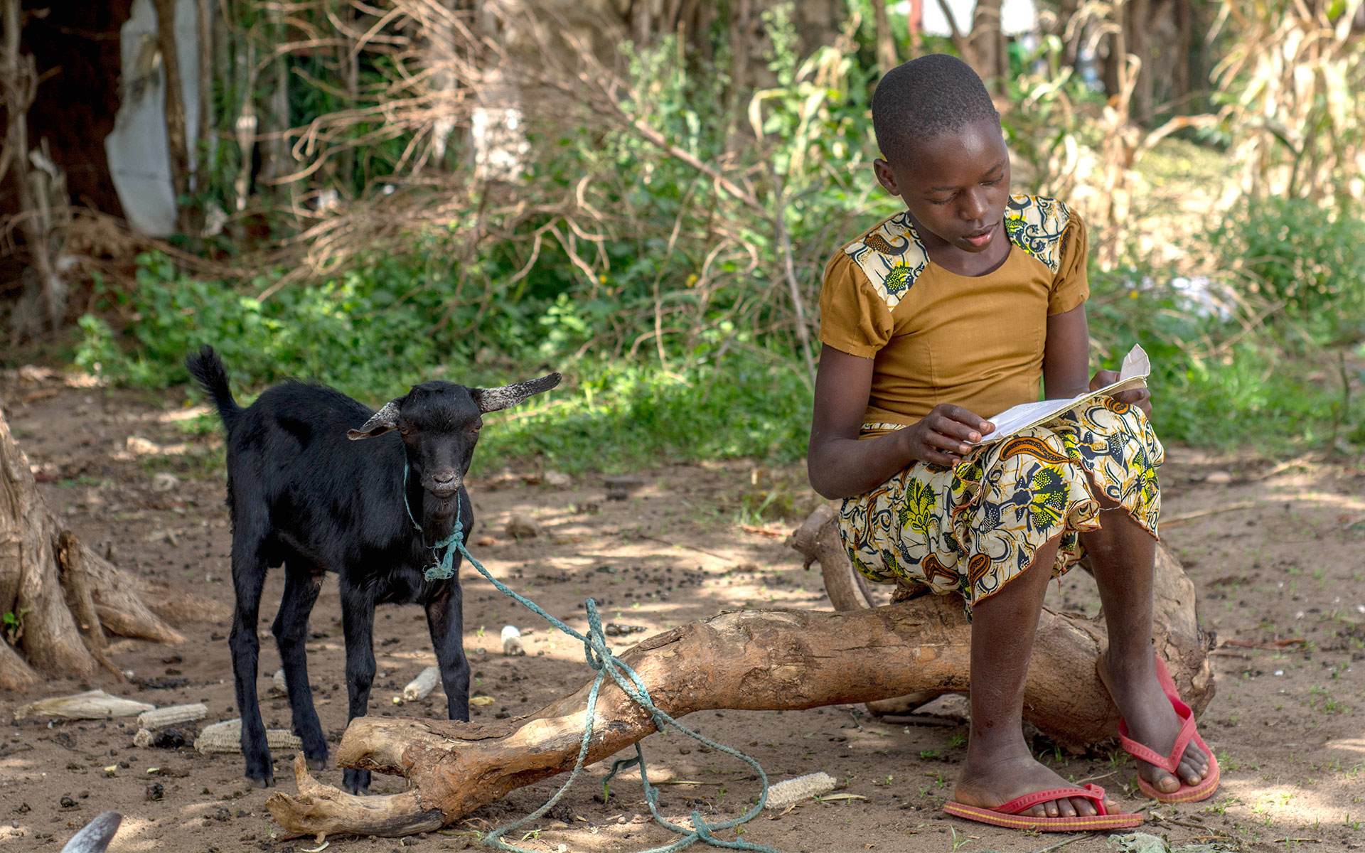 Salama reading sponsor letters while sitting next to a goat