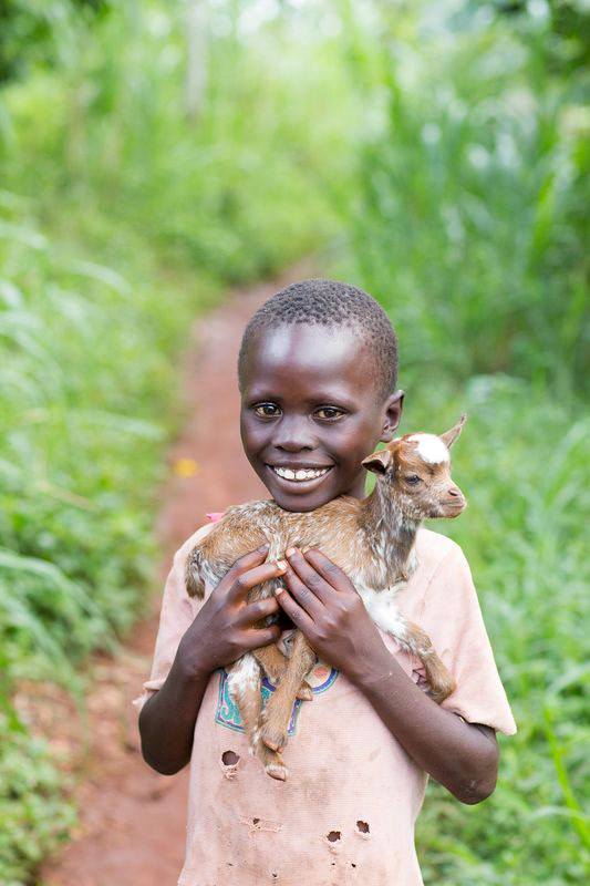 A boy smiles and holds a small goat on his shoulders