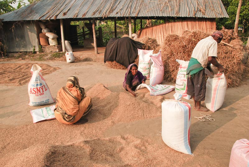 Bangladesh Filling Sacks of Grain