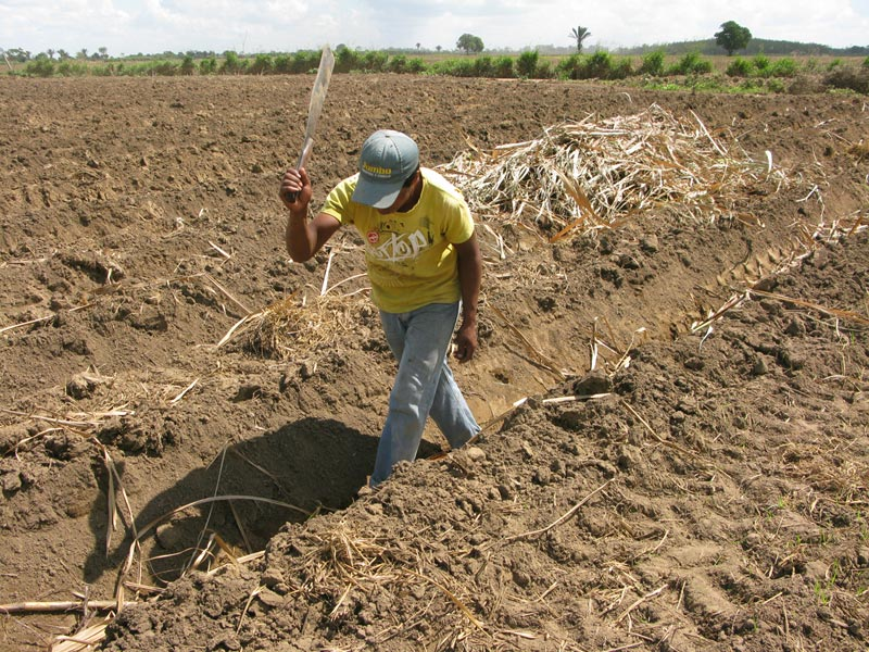 Bolivia man working in field