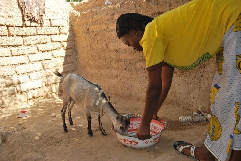 Burkina Faso Woman Feeding a Goat
