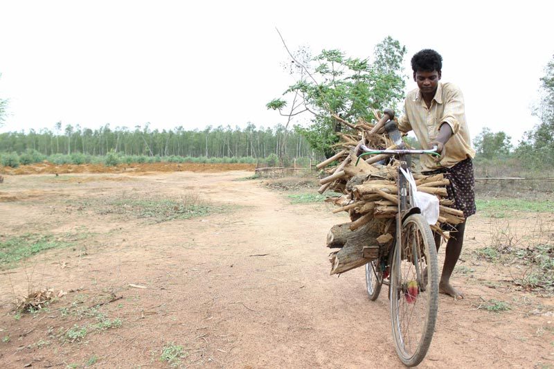 East India Man Carrying Wood on a Bicycle