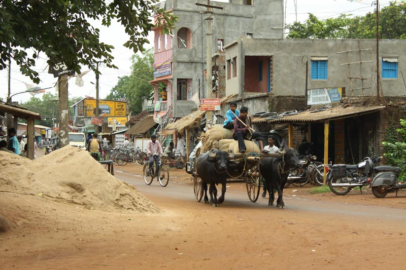 East India Ox Cart on a Busy Road