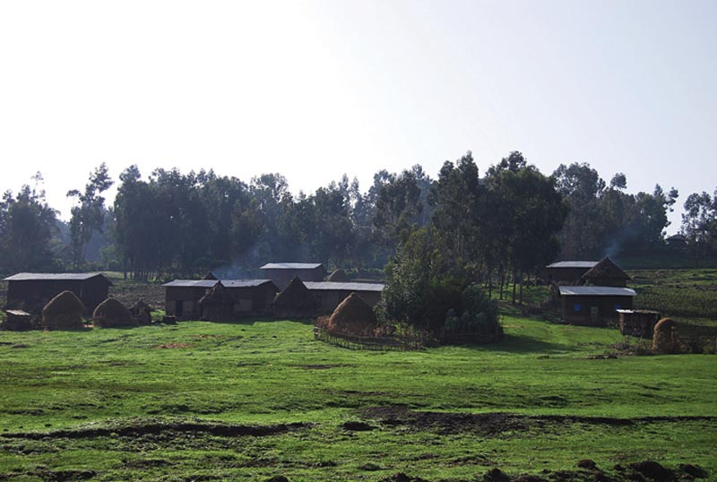 Ethiopia Field and Small Homes
