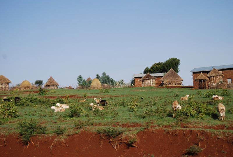 Ethiopia Field with Round Huts
