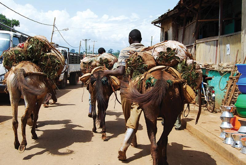 Ethiopia Horses Carrying Supplies