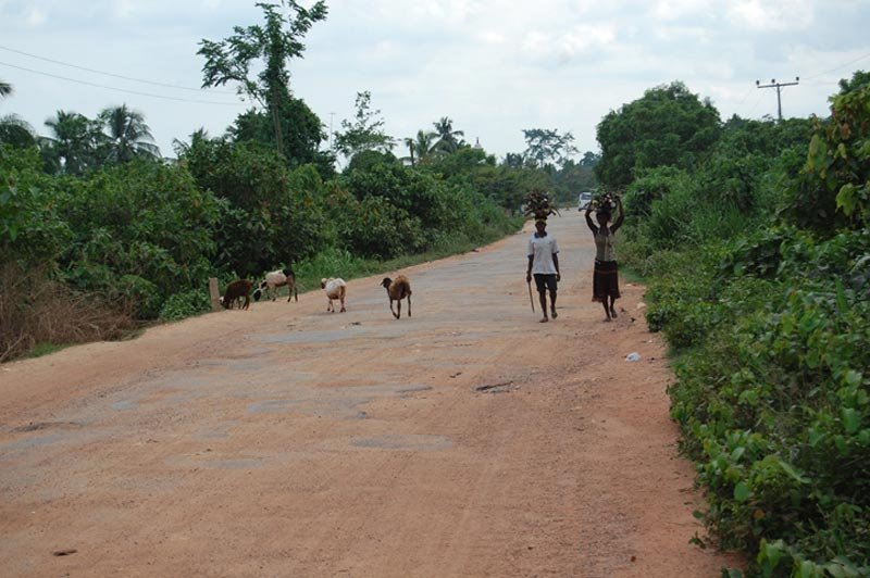 Ghana Women and Goats on a Road