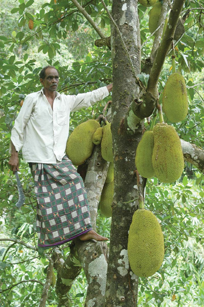 India man in tree