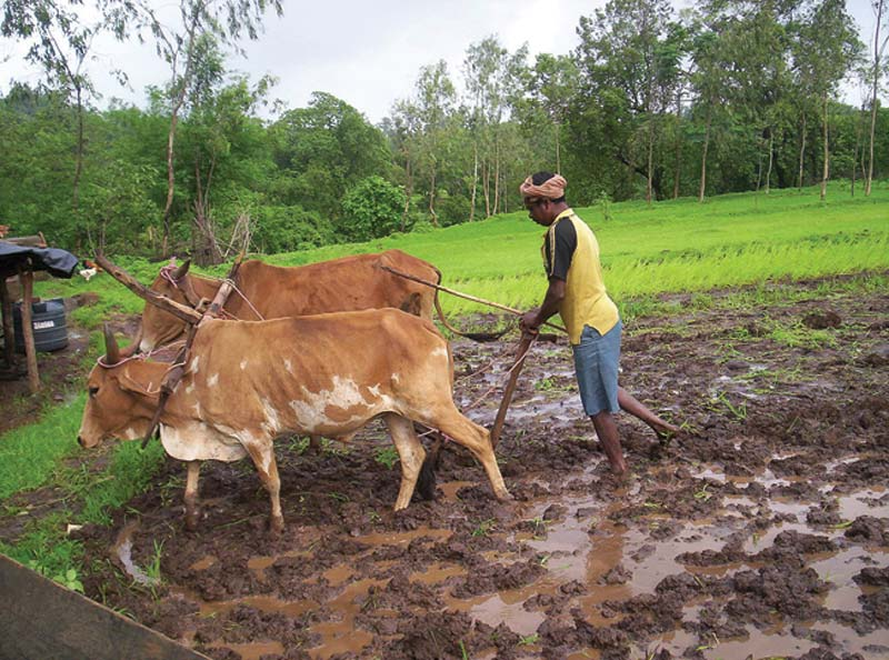 India man plowing field