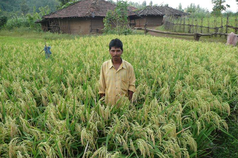 India man standing in field