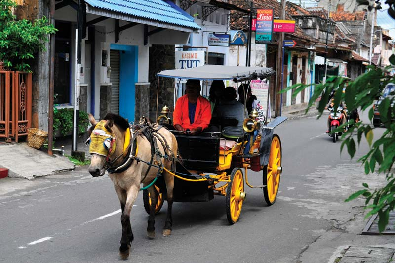 Indonesia horse drawn buggy