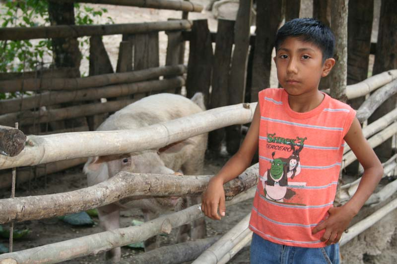 Mexico Boy With Animals