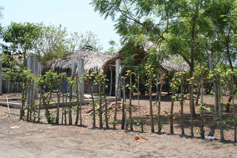 Mexico House With a Fence of Trees