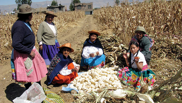 Peru Women Gathering Corn