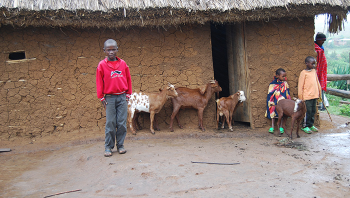 Tanzania Boy Outside Home With Goats
