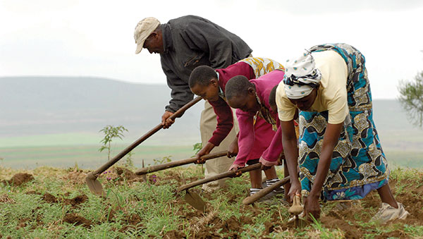Tanzania Women Hoeing the Ground