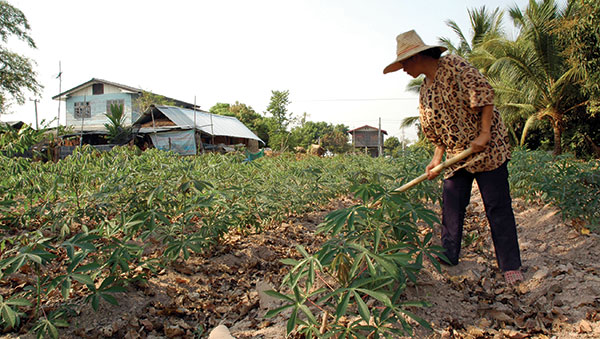 Thailand man hoeing plants