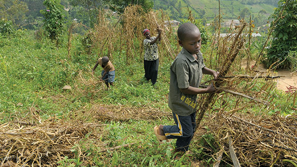 Uganda Boys Gathering Sticks