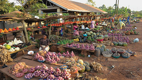 Uganda Produce Stands at Market